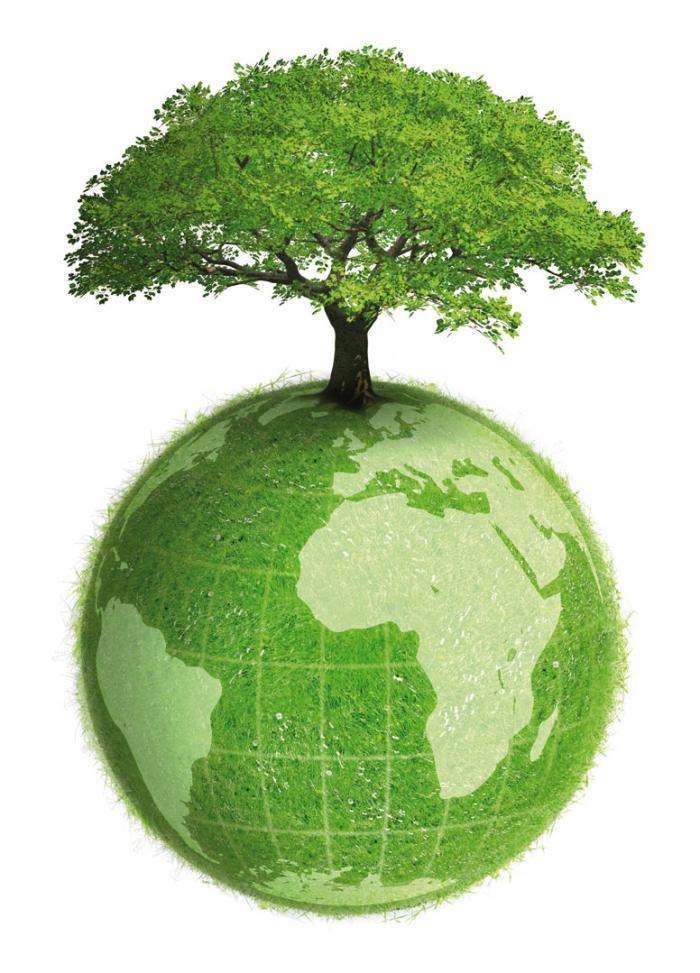 Contributi alla riforestazione...