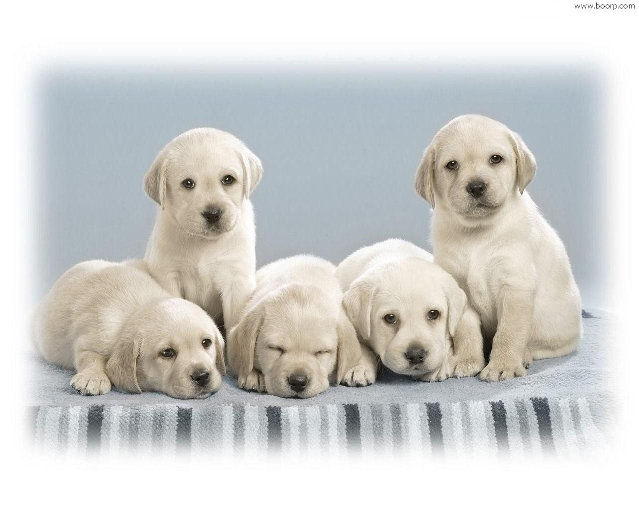 Proprietaria di un allevamento di cani condannata:...
