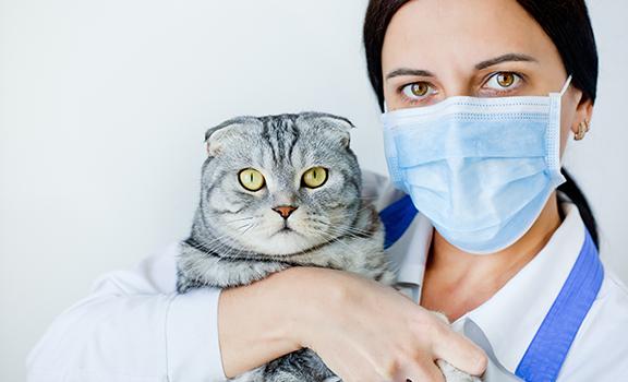 La somministrazione ad un animale di sostanze dopa...