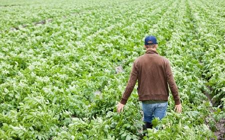 Imprenditore agricolo: il diritto di prelazione ex...