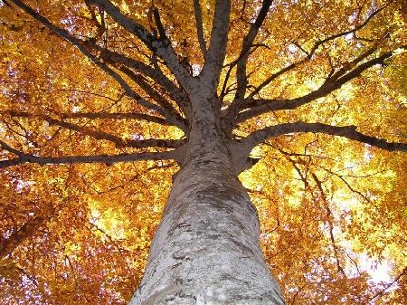 Gli alberi condominiali di alto fusto violano la s...