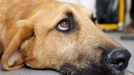 Il proprietario di un cane responsabile di maltrat...
