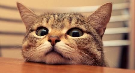 L'agilità del gatto e la dubbia natura oggettiva ...