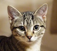 Locazione appartamento ammobiliato: il gatto dell...